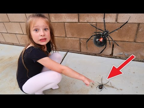 🕷 GIANT SPIDER AT HOME!