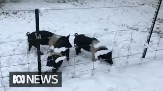 Download Spring snow covers parts of NSW and the ACT | ABC News Mp3
