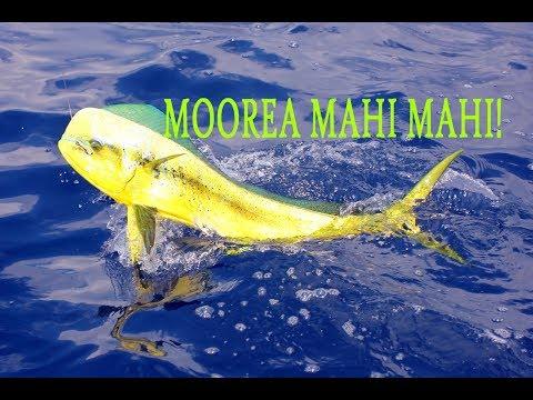MOOREA DEEP SEA FISHING ACTION!