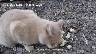 Кошка ест сыр.Можно ли кошкам есть сыр?
