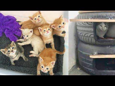 Кошка родила котят на за 27 января