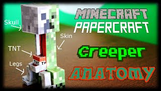 The Complete Anatomy of a Creeper : Why do they Explode? (Minecraft Papercraft)