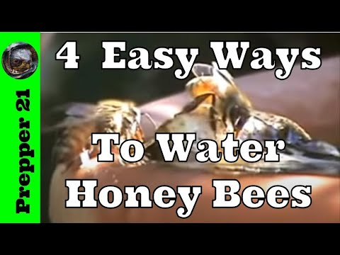Four easy ways to water honey bees youtube four easy ways to water honey bees sciox Choice Image