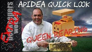 Queen Rearing Apidea Beekeeping Weekly