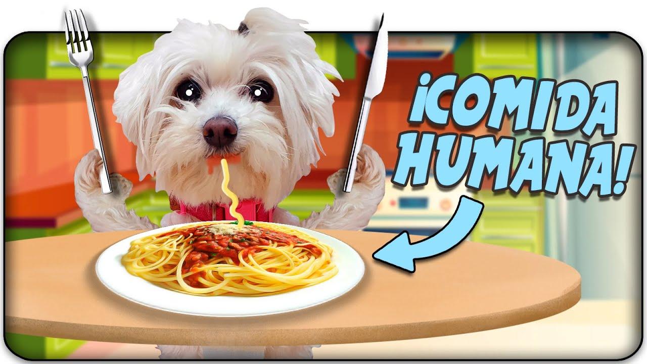 Mi PERRO me ROBA la Comida!🐶🍔 Anima Dogs