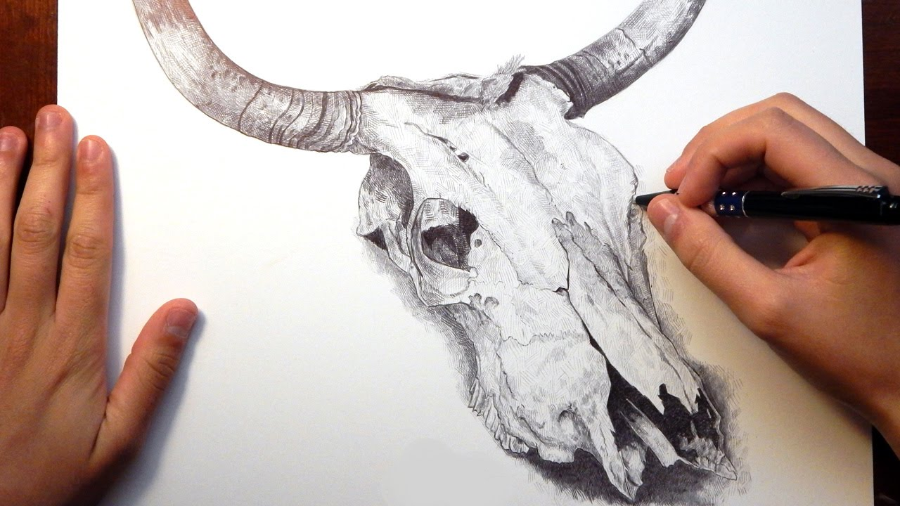 "Ballpoint Pen Drawing ""BULL SKULL"" - YouTube"