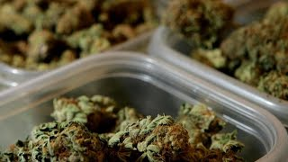 CBS News poll shows strong support for legalizing marijuana