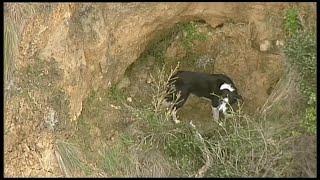 Australia, cane intrappolato su una scogliera: vigili del fuoco si calano con una corda per 15 metri