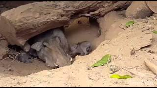 ZOO CAM: Baby Warthogs at Emperor Valley Zoo!