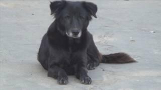 Собачья жизнь собак Индии