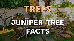 Juniper Tree Facts