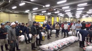 【Tokyo Sightseeing#2】Let's go to the Tsukiji Fish Market to watch the Tuna Auction!