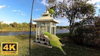 Des Perroquets dans la mangeoire