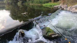 Спининг риболов на река струма