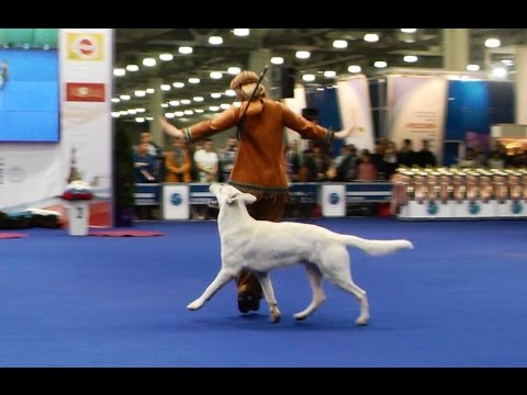 "Танцы с собаками ""Россия - 2014"". Dog Dancing. Canine Freestyle."
