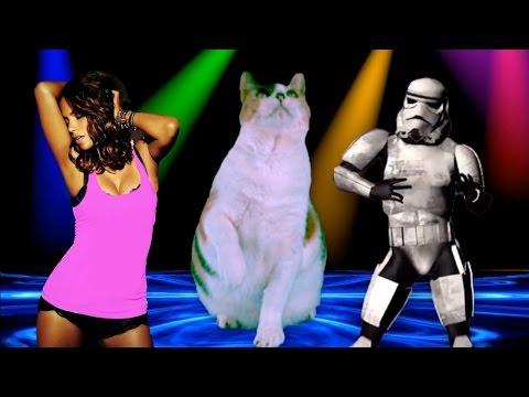 Epic Victory Cat Dance!