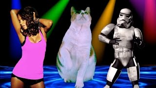 Epic Victory Cat Dance!
