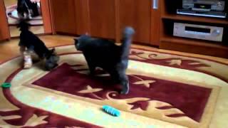 ▶ Эти Котята такие милашки Лучшие приколы с кошками  YouTube 720p