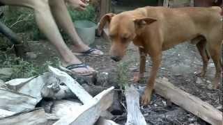 Собака ест траву!!!ШОК!!!