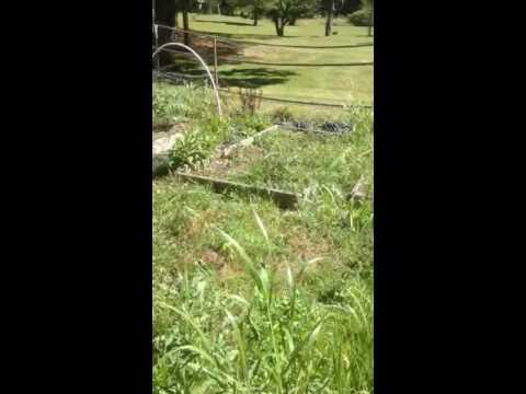 Eco house garden