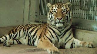 2015年1月1日に撮影。前半は、2014年3月に上海から大阪の天王寺動物園に...