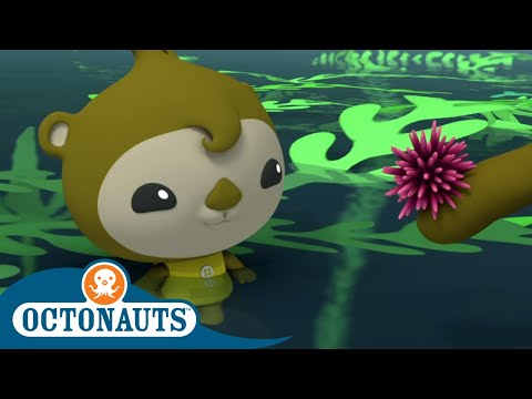 octonauts---periwinkle-|-cartoons-for-kids-|-underwater-sea-education