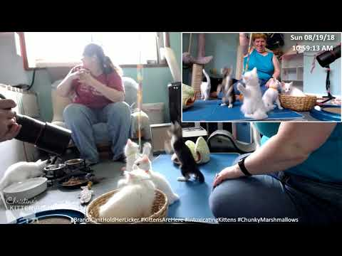 brandi-&-the-intoxicating-kittens:-photo-shoot-8/19/2018