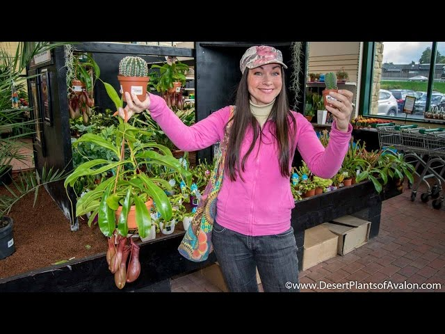 Johnstown Garden Centre Visit And My Wonderful New Plants Youtube