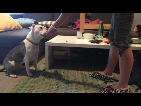 how to stop counter surfing - Leave It!