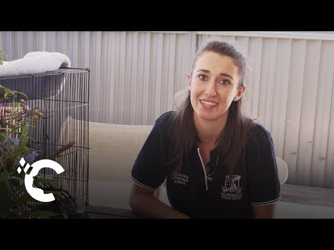 A Day In The Life: Melbourne Veterinary Student