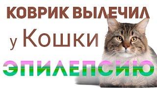 Использование ковра вылечило эпилепсию у кошки!