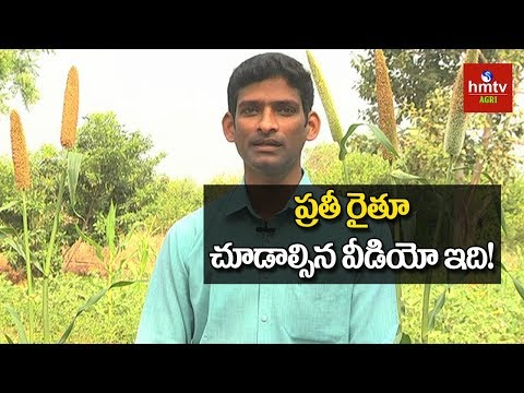 Natural Farming | Techie Bhaskar Inspiration to Farmers | hmtv Agri