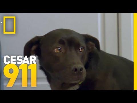How To Build A Dog's Self-Esteem | Cesar 911