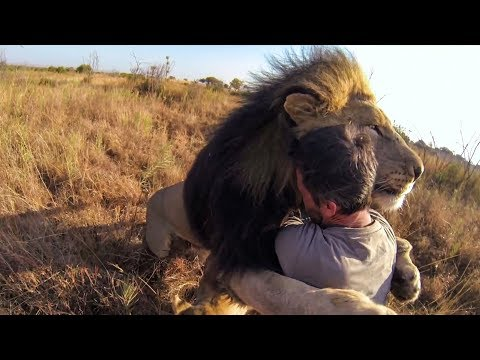 7 Amistades Increíbles Entre Animales y Personas