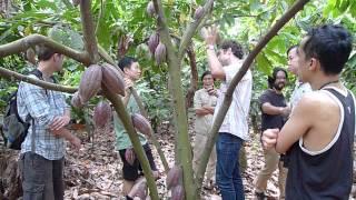 越南可可果園之旅 Cacao Farm in Vietnam