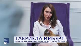 В каком возрасте кастрировать кота/стерилизовать кошку?