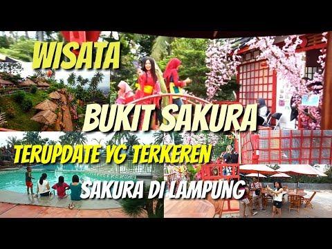 Wisata bukit sakura lampung, sakura dilampung, wisata terkeren dan terindah, Sakura Japan in Lampung