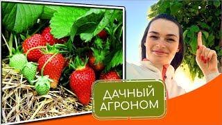 Клубника и садовая земляника: 7 вопросов и ответов