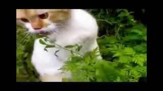 Лучшие Приколы с кошками 2015  Ржач !