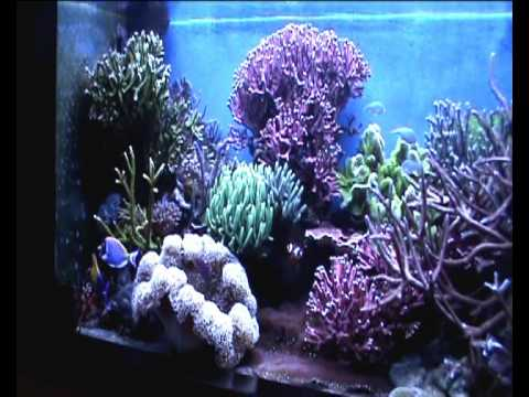 Acquario marino di barriera pesci e coralli tropicali di for Acquario tartarughe e pesci insieme