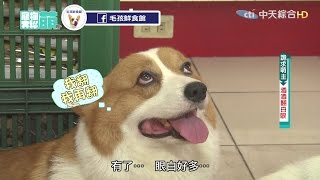 【寵物大聯萌#完整版】犬界女優「小皮」 超人氣萌主「酒大」來了!2016.10.30