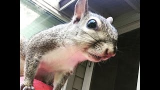 Squirrel Grows Up Big And Strong So She Can Go Home | The Dodo