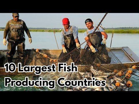 Top 10 Largest Fish Producing Countries In The World