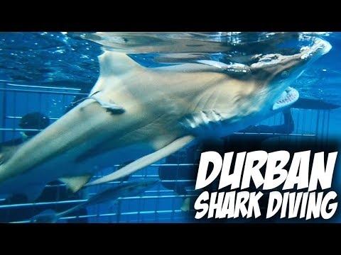 Swimming with SHARKS in Durban - South Africa | Travel Vlog #55