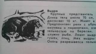 Выдра речная - Крупный представитель семейства куньих