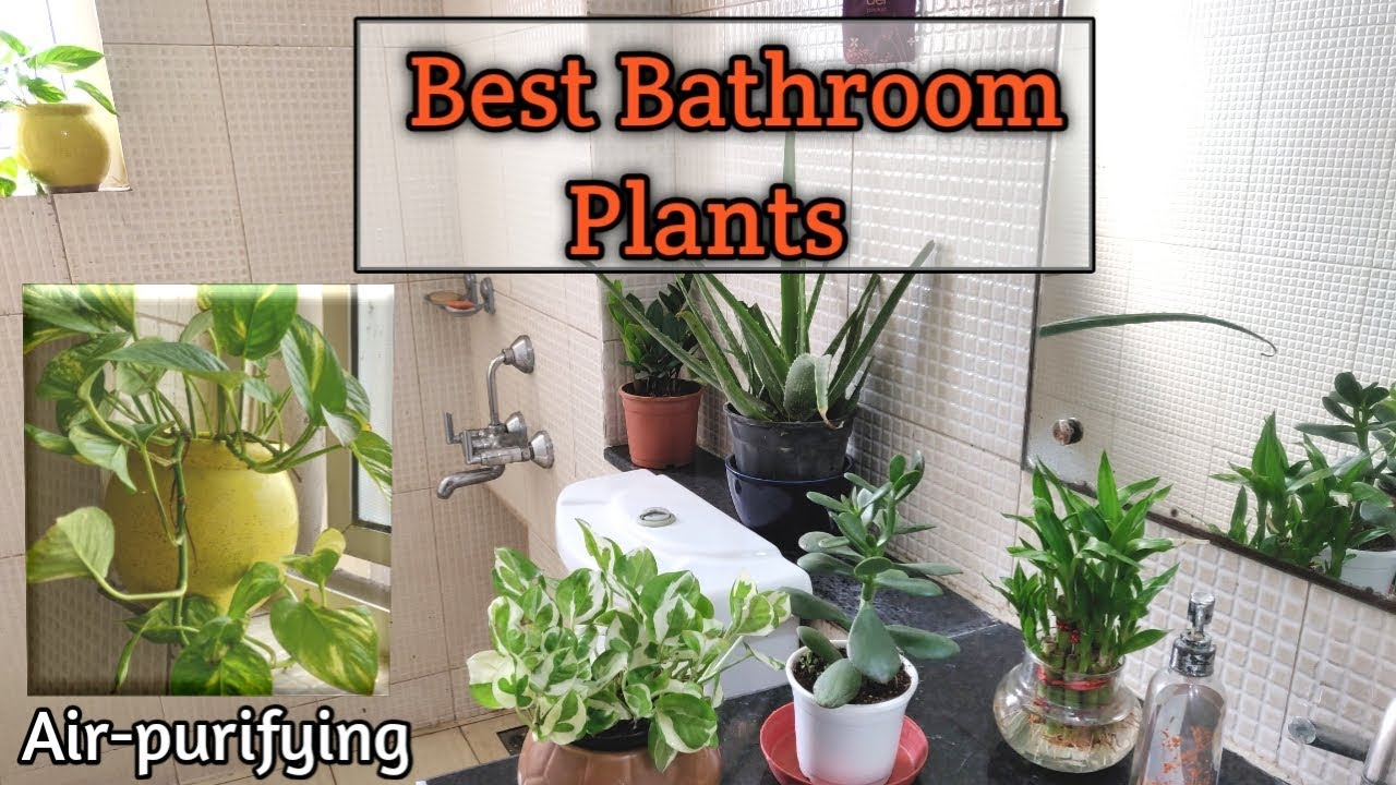 Best Bathroom Plants | Air-Purifying plants That Absorb ...