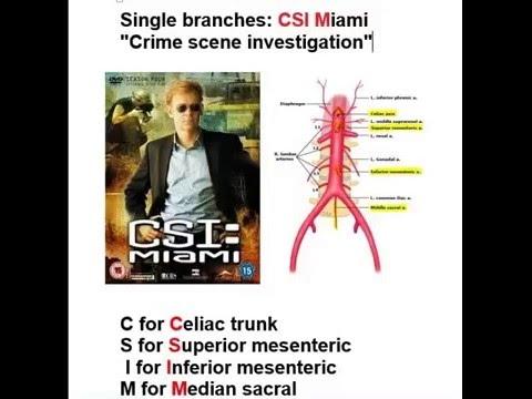 Abdominal Aorta branches mnemonic anatomy  vertebral level