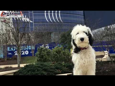 Home – Macon Dog Trainers | Off Leash K9 Training Macon, GA