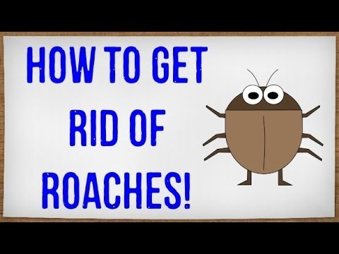 How to Get Rid of Roaches Fast | Getting Rid of Cockroaches in your ...