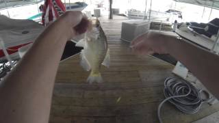 Crappie Fishing in Winter- 50 Keepers